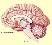 Nucleus_accumbens